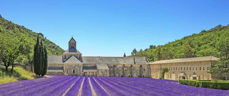 Lavendelmarker i Provence, Frankrig