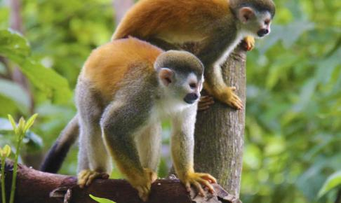 To aber i Costa Ricas jungle - Risskov Rejser