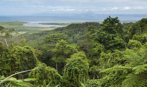 Smuk udsigt over Daintree National Park Cape Tribulation, Australia - Risskov Rejser