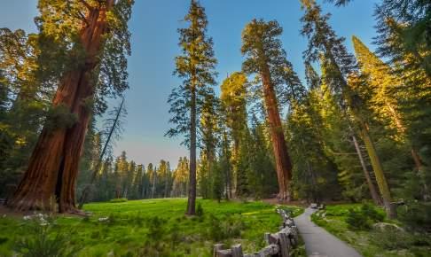Giant Redwoods i Sequoia National Park i California - Risskov Rejser