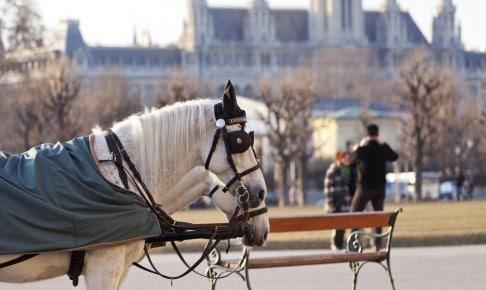Flotte heste - Østrig - Risskov Rejser