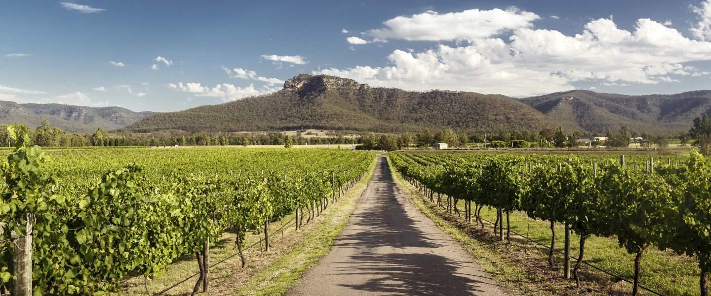 Vingårde i Hunter Valley, Australien - Risskov Rejser