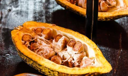 Kakaobønner fra Costa Rica - Risskov Rejser
