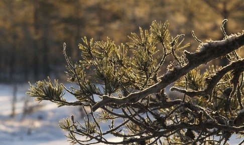 Winter in Viru bog, Lahemaa - Risskov Rejser