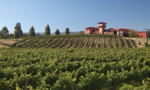 Marlborough vinmark - Risskov Rejser