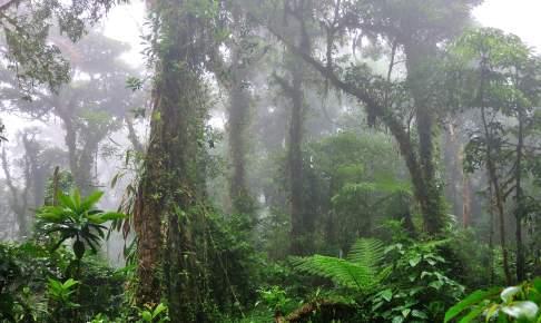 Tågeskov i Monteverde, Costa Rica