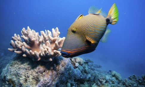 The Great Barrier Reef - Risskov Rejser