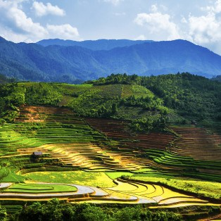 Risterrasser er med, til at skabe det fantastiske landskab som gør rejser til Bali så unikt.