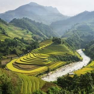 Risterrasser i Vietnam
