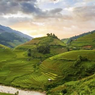 Risterrasser i Vietnam - Risskov Rejser