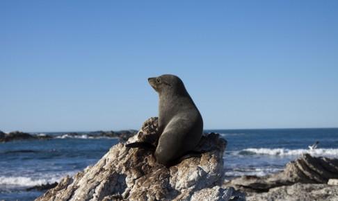 En sæl der sidder på en klippe for at varme sin krop i solen - Risskov Rejser