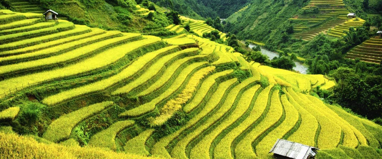 Vietnam - Risskov Rejser