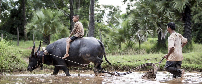 Glad dreng rider på ryggen af en vand buffalo - Risskov Rejser