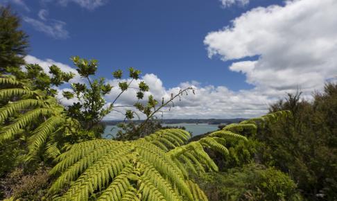 Udsigt over tropiske Bay of Islands - Risskov Rejser