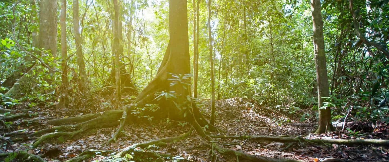 Jungleparadiset Borneo - Risskov Rejser
