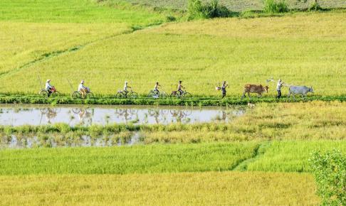Cykeltur i Vietnam - Risskov Rejser