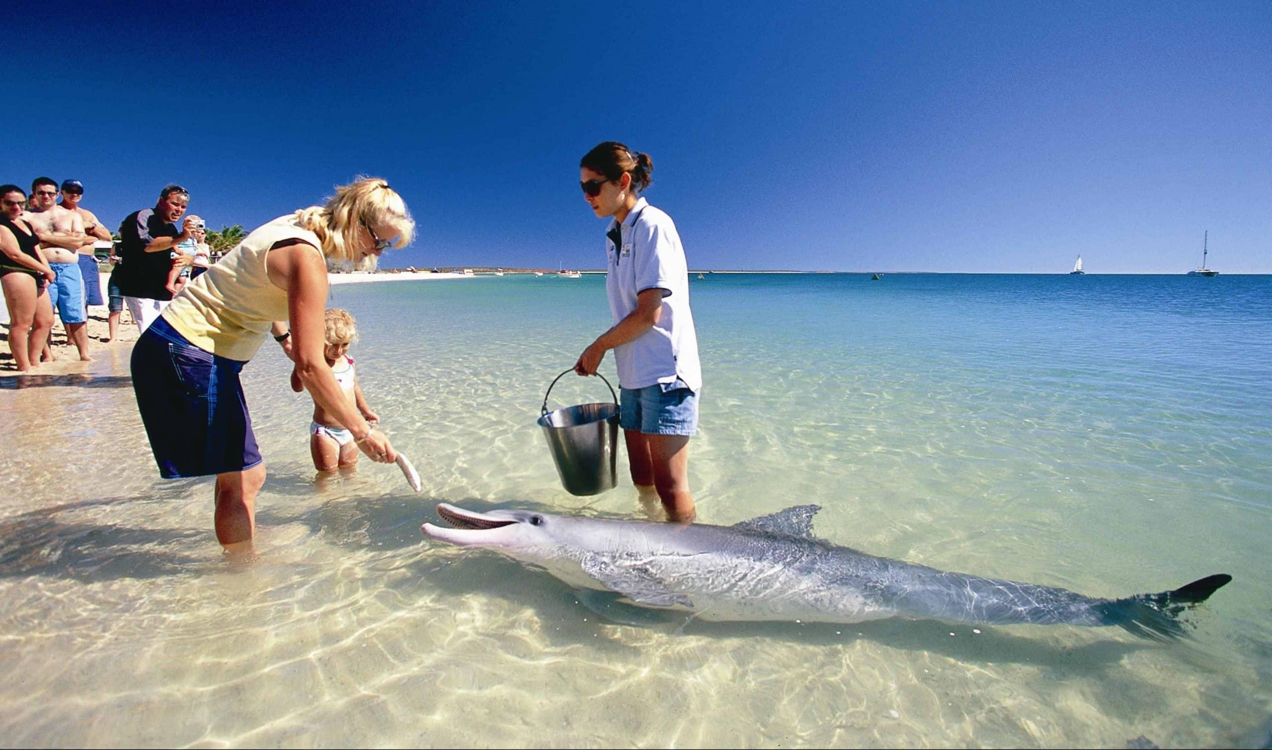Delfiner ved Dolphin Coast i Australien - Risskov Rejser