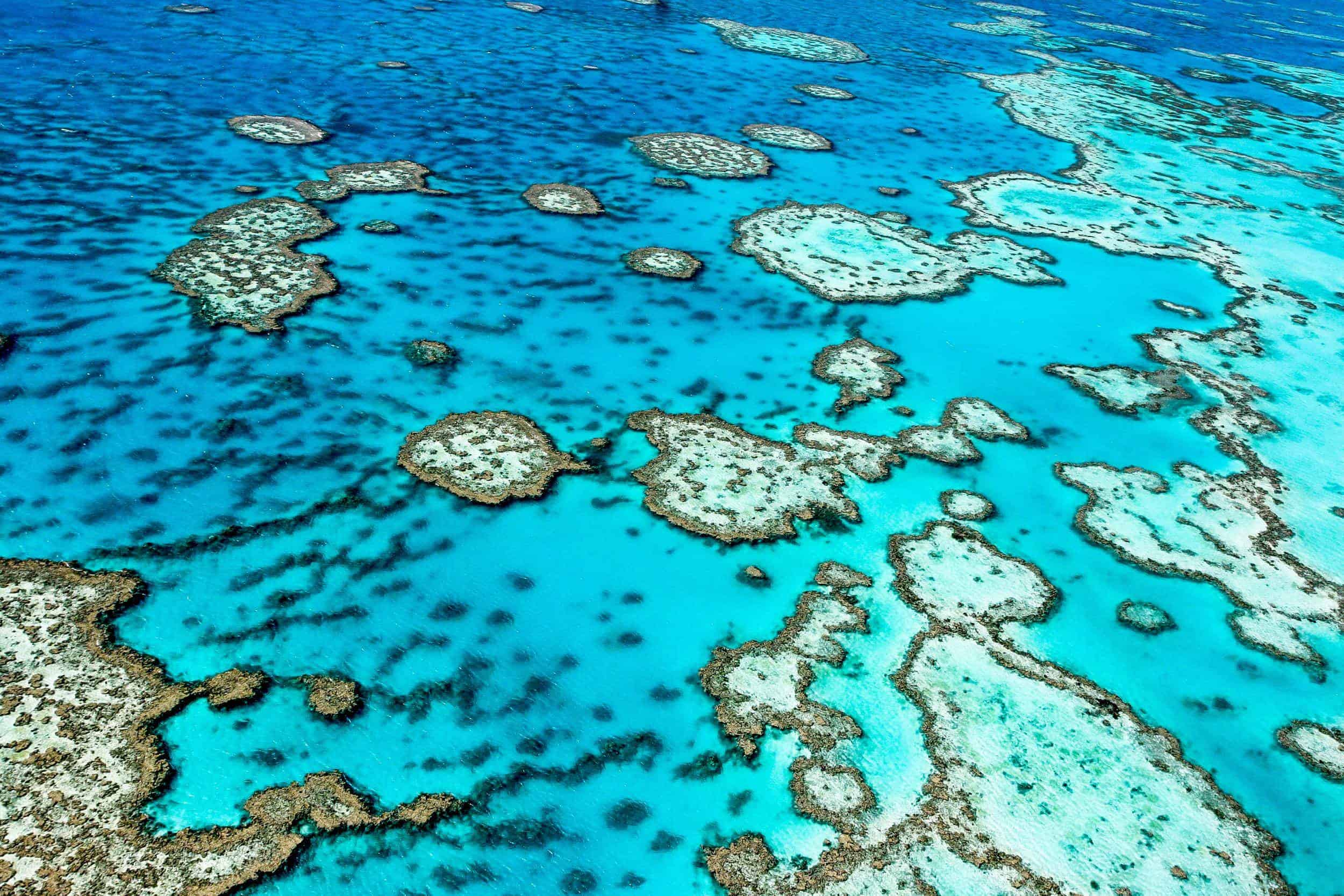 Det mægtige Great Barrier Reef i Australien
