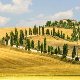 Mark over Toscana - Risskov Rejser