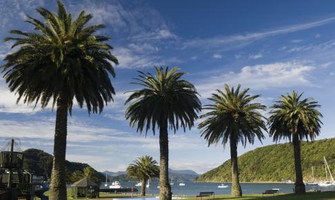 Palmer i Picton - Risskov Rejser