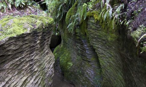 Te Anau Glowworm Caves - Risskov Rejser