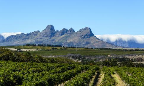 Vinmarker ved Stellenbosch