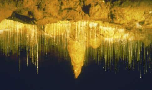Drypstenshulerne Waitomo - Risskov Rejser