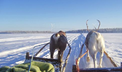 Himmelsk nordlys & snelandskab - Norge - Risskov Rejser