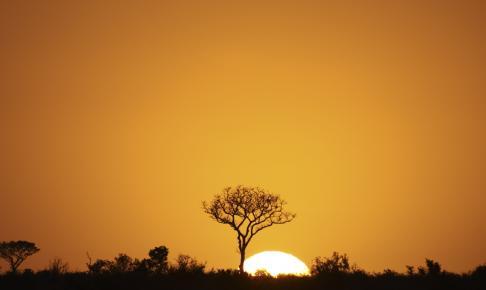 Solnedgang i Kruger National Park