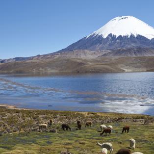 Altiplanosletten med lamaer og bjerge - Risskov Rejser