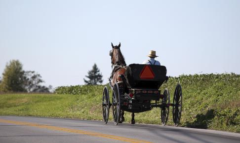 Amish mand i hestevogn - Risskov Rejser