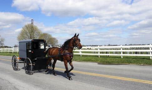 Amish hestevogn - Risskov Rejser