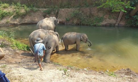Oplev badende elefanter på rundrejse i Thailand med Risskov Rejser
