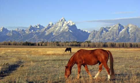 Hest græsser fredeligt foran bjergtagende Grand Tetons i Boise - Risskov Rejser