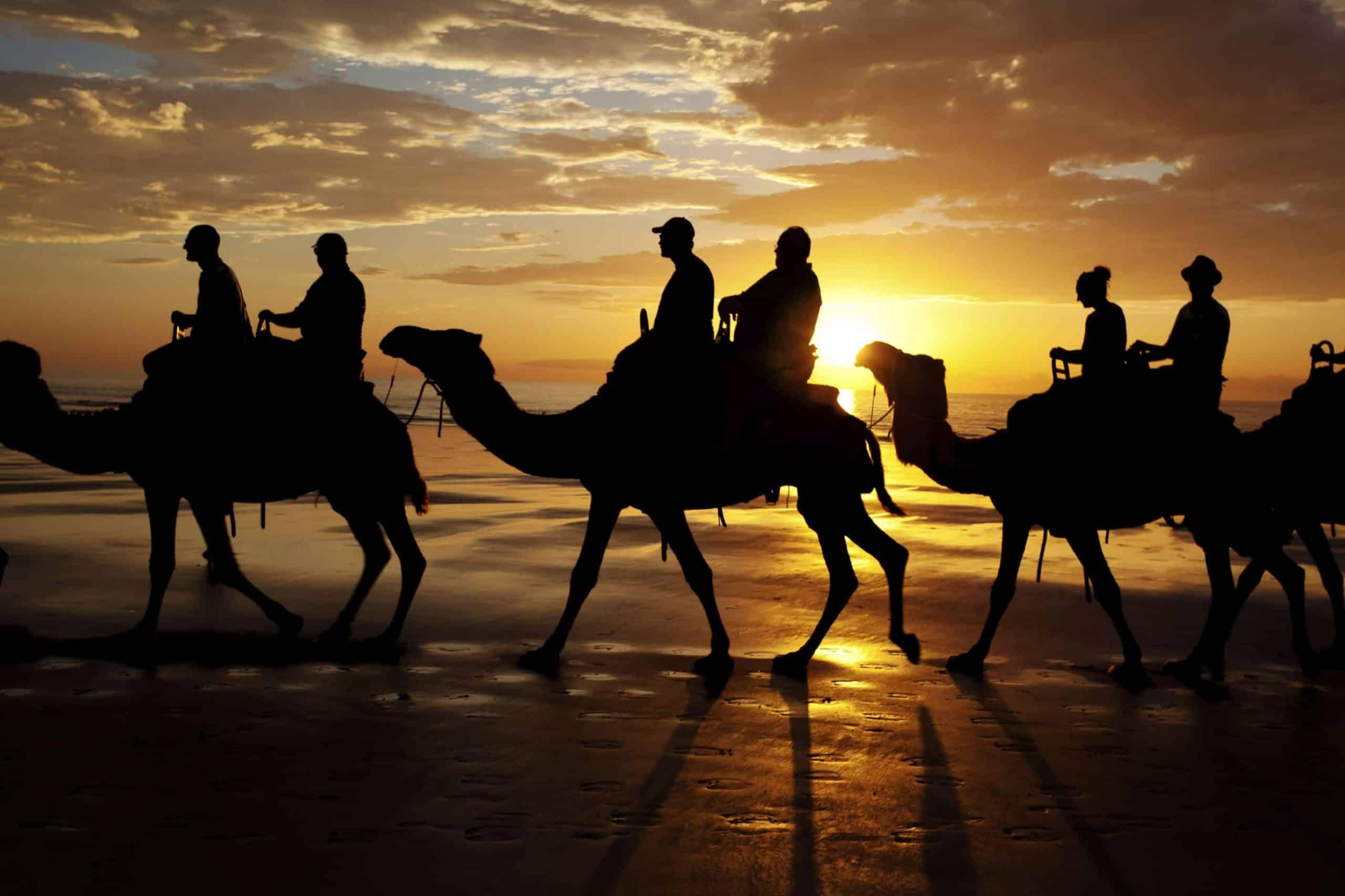 Kamelridning, Australien - Risskov Rejser