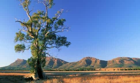 Flinders Ranges - Risskov Rejser