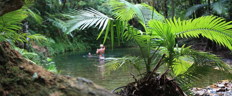 DaintreeBad i de kolde regnskovssøer i Daintree National Park - Risskov Rejser
