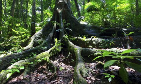 Oplev en autentisk regnskov og dyreliv - Risskov Rejser