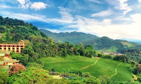 Teplantage ved Doi Mae Salong - Risskov Rejser
