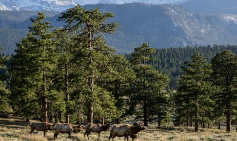 Elge i Estes Park - Risskov Rejser