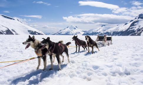 Hundeslæde i Alaska - Risskov Rejser