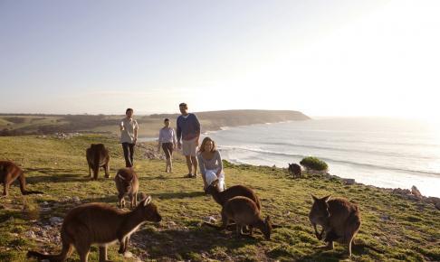 Kænguruer på Kangaroo Island - Australien - Risskov Rejser