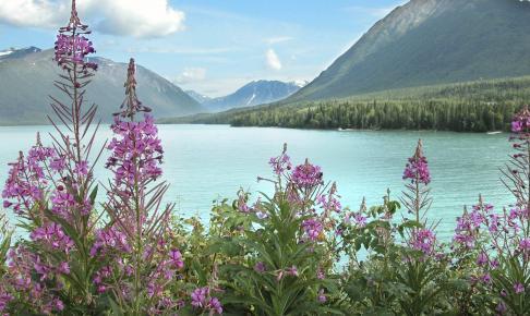 Kenai-halvøen i Alaska - Risskov Rejser