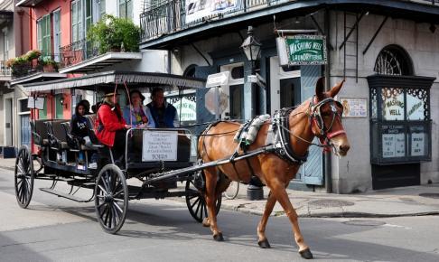 Bliv kørt rundt i New Orleans via en hestevogn - Risskov Rejser