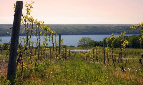 Lake Seneca vinmark - Risskov Rejser