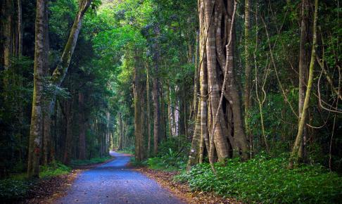 Vejen gennem Lamington National Park - Risskov Rejser