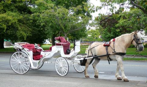 Hestevogn - Risskov Rejser