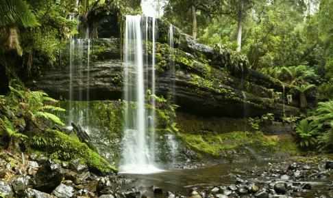 Russell Falls - Risskov Rejser