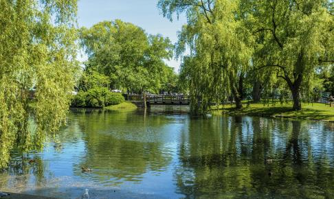 Toronto Island med sø og træer - Risskov Rejser