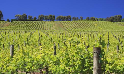 Vinområdet Yarra Valley ved Melbourne - Risskov Rejser
